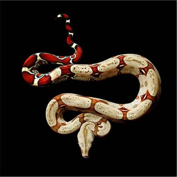 Невероятная красота ядовитых змей в фотопроекте Марка Лайта