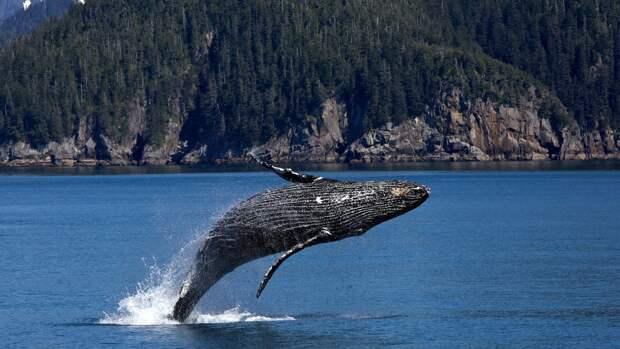 Врачи не поверили в историю о проглоченном китом дайвере в США