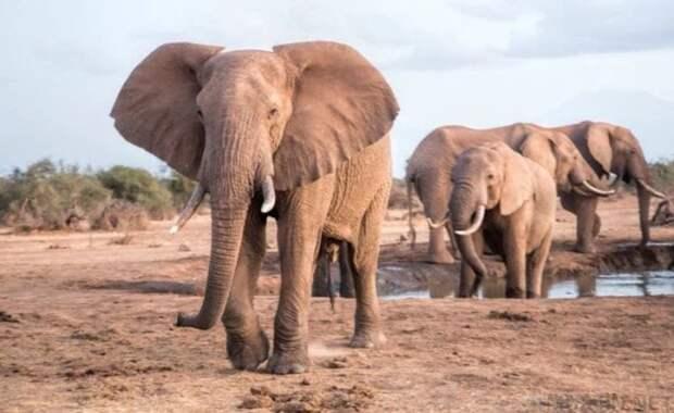 15 удивительных (а иногда и умилительных!) фактов о животных