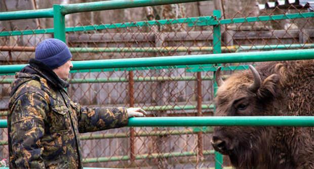 Молодняк зубров из питомника под Серпуховом переехал в соседний регион