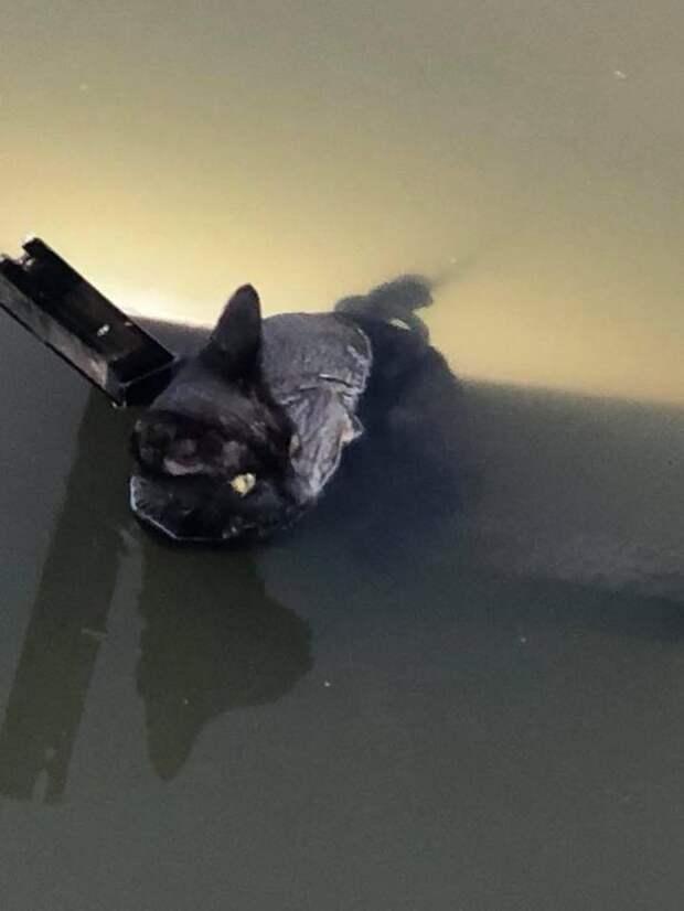 Девушка вытянула кота из реки и застыла в изумлении. К нему была привязана циркулярная пила!