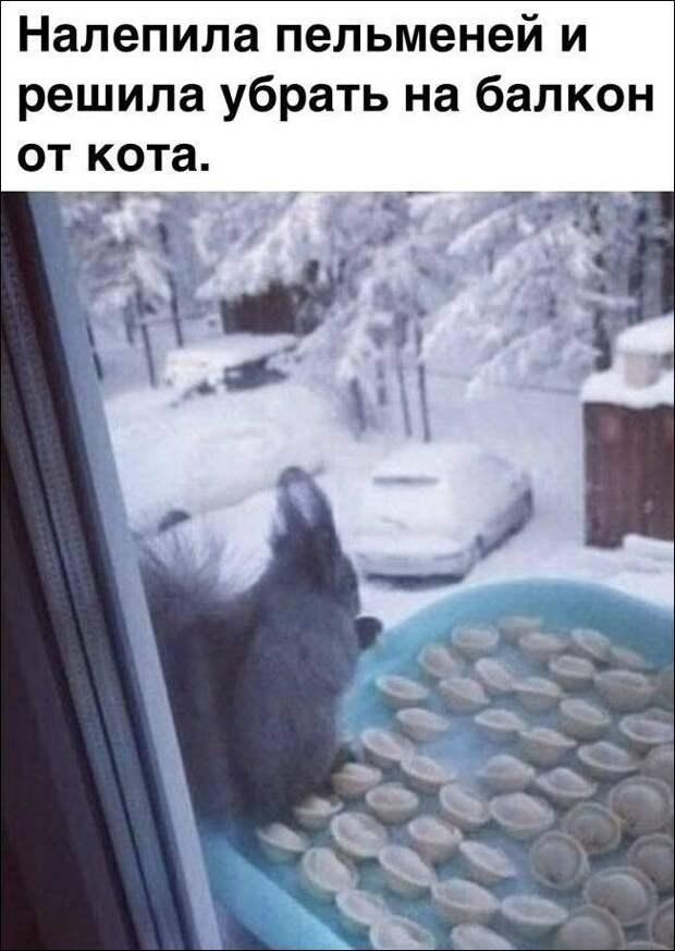 На изображении может находиться: текст «налепила пельменей и решила убрать на балкон от кота.»