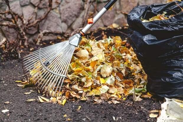 Листья – в отдельную емкость