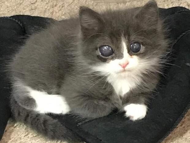 Котенок родился слепым, и шансов найти дом у него было мало