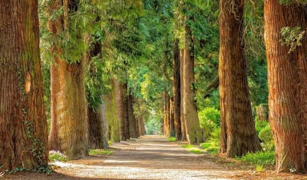 Стали известны подробности создания природного парка вРостовской области
