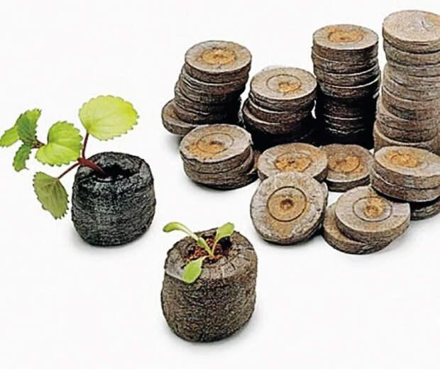 Торфяные таблетки и субстрат для выращивания рассады