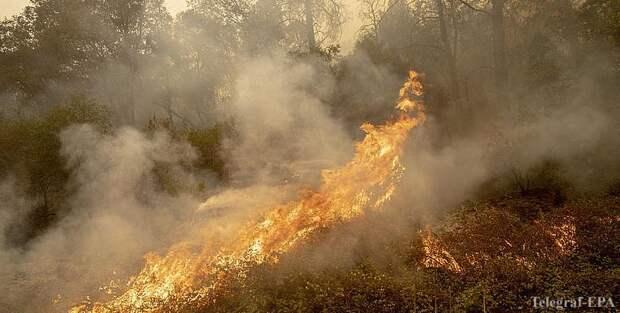 В США бушует почти 100 лесных пожаров, число жертв растет - ТЕЛЕГРАФ