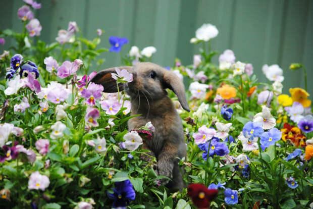 Заяц наслаждается сладкими ароматами цветов.