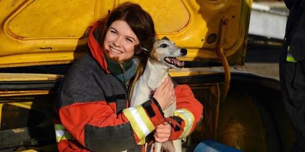 Кинологи Пожарно-спасательного центра отмечают профессиональный праздник