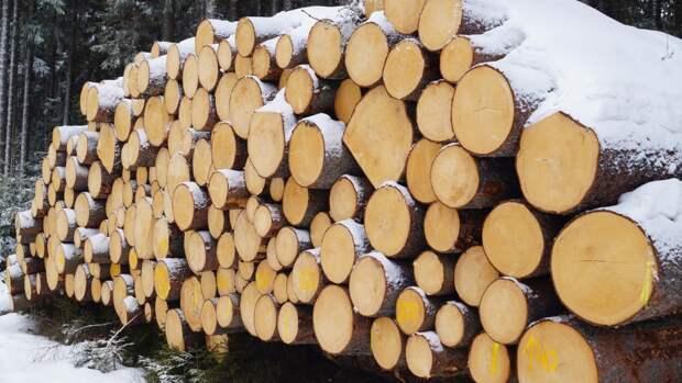 Экспорт древесины для строительства домов могут ограничить в России