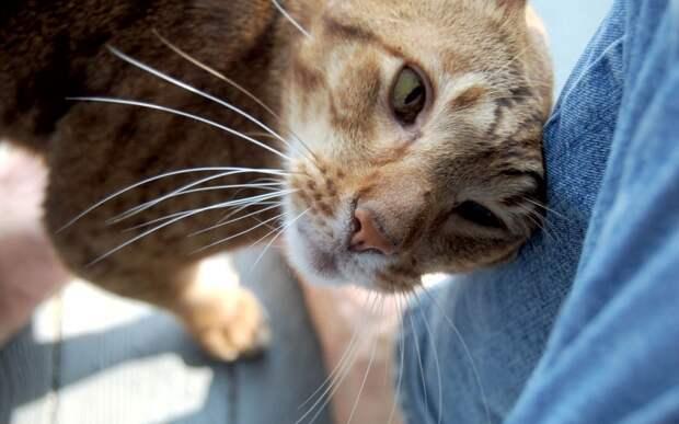 Как наши кошки пытаются с нами говорить