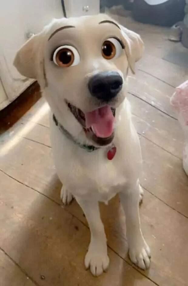Snapchat добавил новый фильтр Cartoon Face, который делает собак похожими наперсонажей Диснея