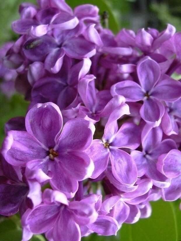 Эти цветы !