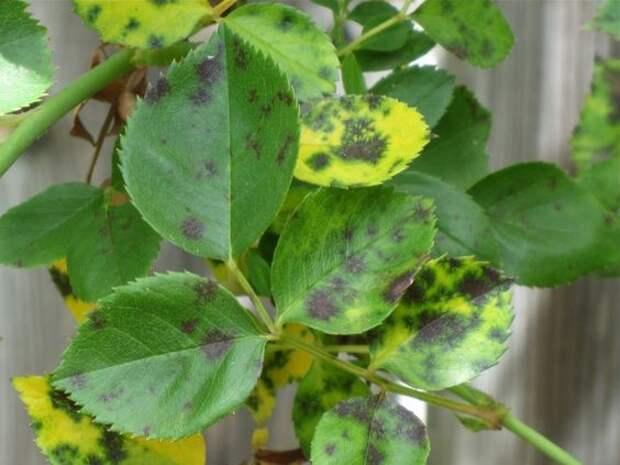 8 распространённых садовых проблем и способы их решения