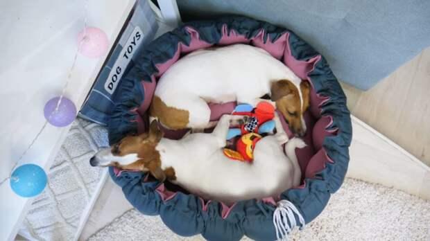 Потрясающая лежанка-трансформер для собак — легко и просто повторить