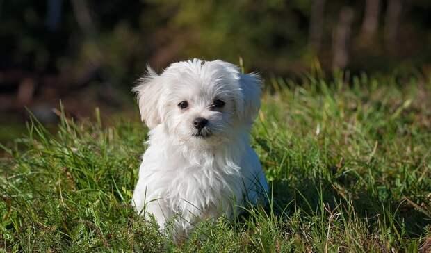 Никому ненужны: волонтеры пристраивают собак убитой девушки-блогера изЕкатеринбурга