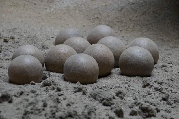 Китайский школьник нашел 11 окаменелых яиц динозавра