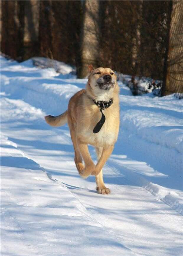 Собачьи истории со счастливым концом