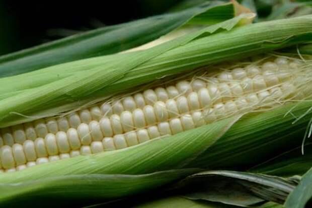 Ловля рыбы на кукурузу: особенности и секреты