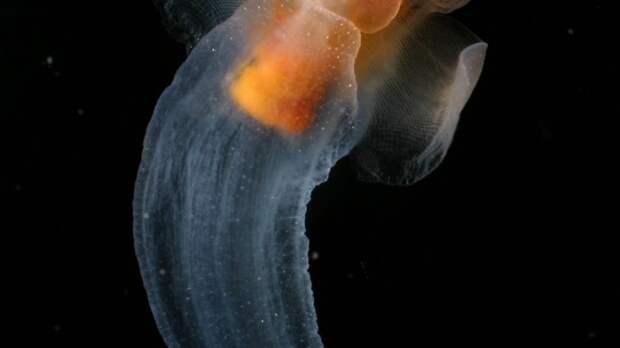 Кто проживает на дне океана?