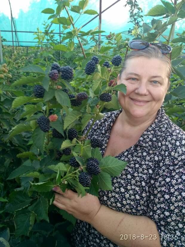 Десять лет назад мы были нищими, а сейчас наши ягодники растут от сочи до Сахалина!