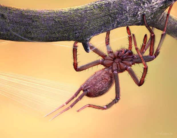 Как паук может спасти жизнь человека? (окончание)