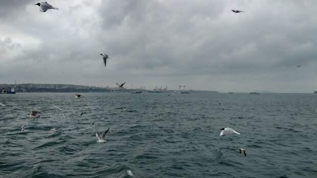 В МИД РФ озвучили цель захода британских военных кораблей в Черное море