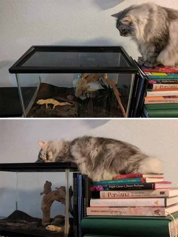 Дружба кошек и ящериц