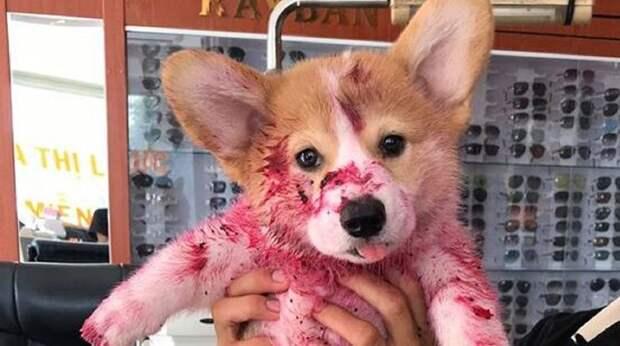 Увидев на полу любимого щенка, хозяева пришли в ужас. А ведь малыш просто немножко пошалил!