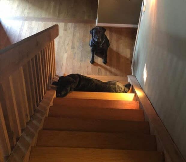 15 собак, которые пытались быть хорошими и послушными, но что-то пошло не так
