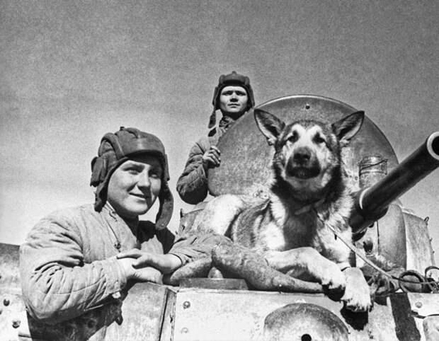собака минно-розыскной службы (МРС), участник Великой Отечественной войны