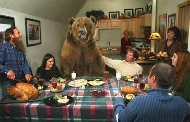 Человек и медведь - история о дружбе Любовь, домашний питомец, дружба, медведь, фото, человек