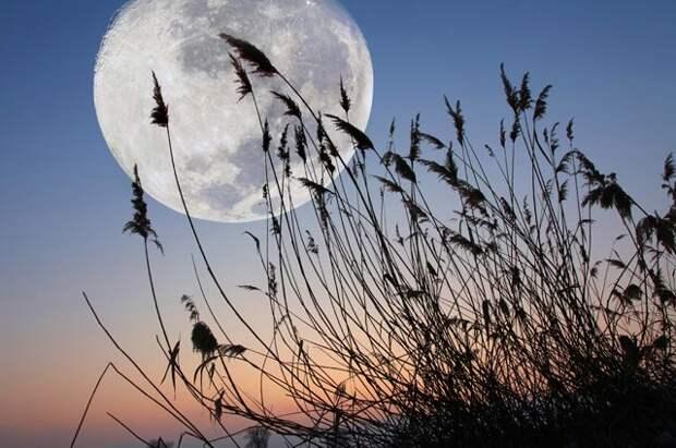 Лунный календарь садовода и огородника с 10 по 25 августа