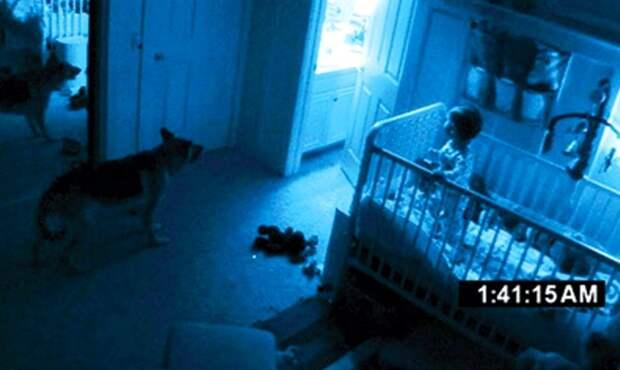 7 доказательств того, что наши домашние животные видят реальных призраков