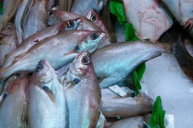Путассу - одна из самых недорогих рыб.