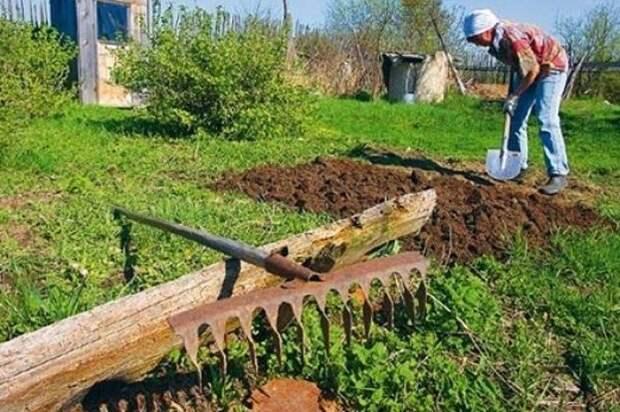 Специалист предупредил россиян о налоге при продаже овощей с огорода