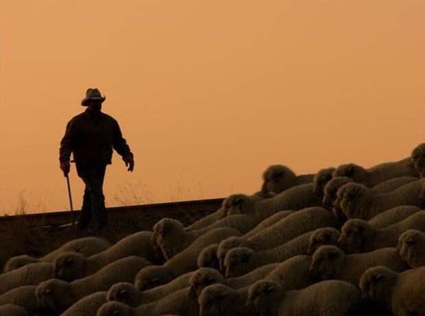 25. Если вы пасете своих овец на железнодорожных рельсах в штате Миссури с намерением причинить ущерб поезду, вас могут оштрафовать на 50 тысяч долларов. абсурдные законы, законы сша, сша