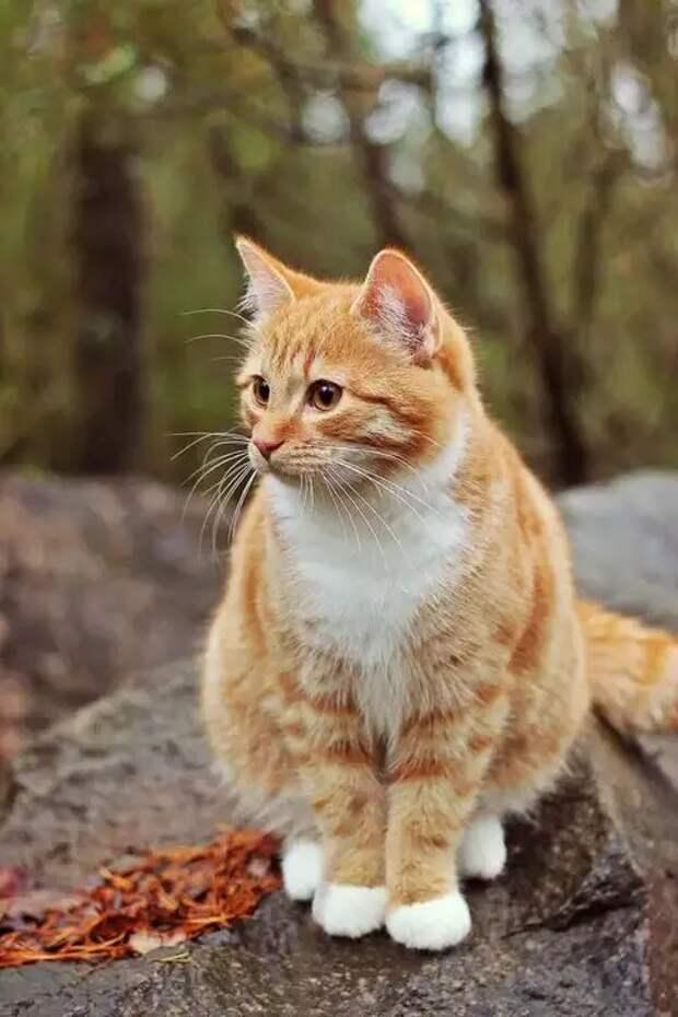 Свекровь усыпила кошку, пока хозяева были на отдыхе