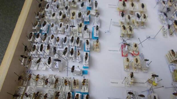 Мужчина пытался вывезти из России в Финляндию две тысячи мертвых жуков