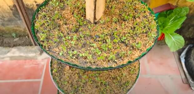 Оригинальная и простая вертикальная конструкция для выращивания зелени, которая не займет много места