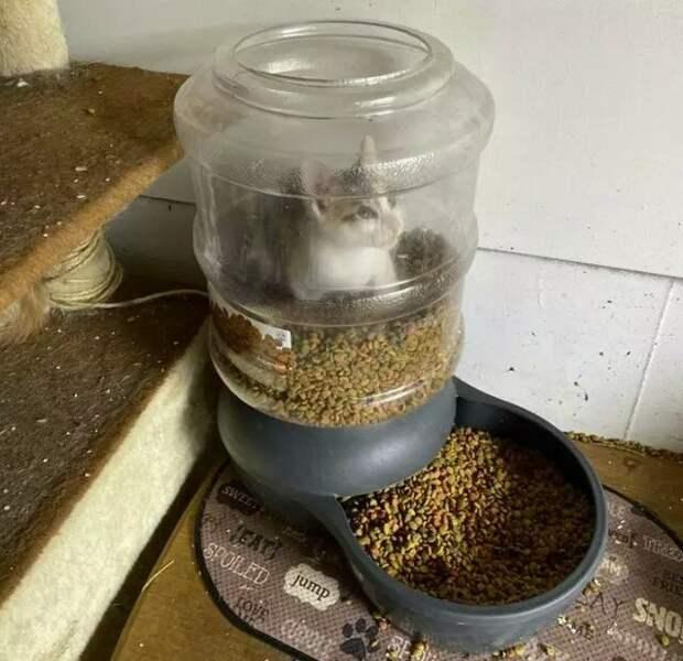 12 наглых кошек, считающих себя хозяевами дома