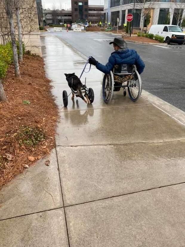собака-инвалид