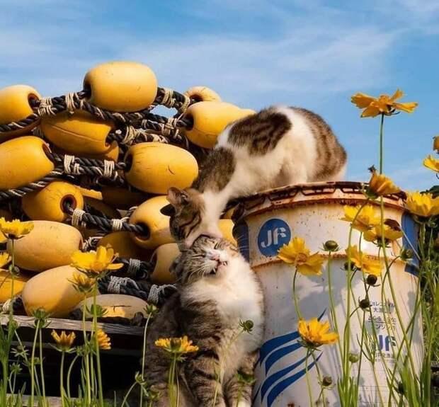 20 супер-мимимишных фотографий, которые вызовут увас восторг
