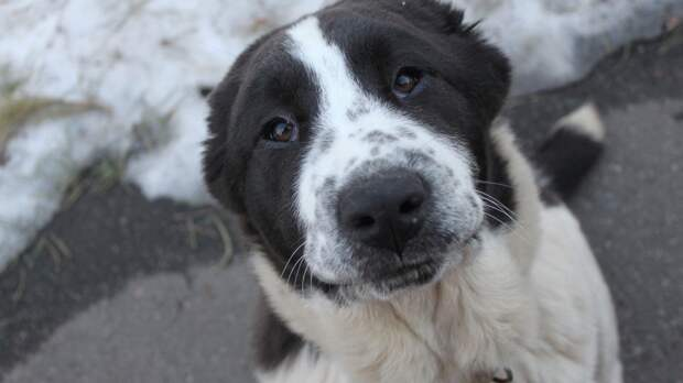 Волонтеры устроили ярмарку по пристройству бездомных животных в Якутске