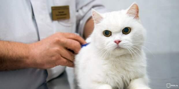 Прививки от бешенства в Строгине будут делать 5 и 6 июня