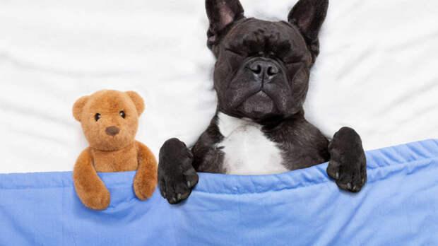 Что ваш пес видит во сне