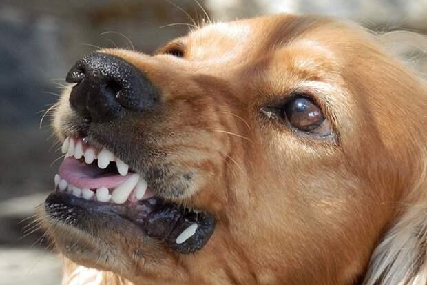 Почему собака лает на одного человека, а другого не трогает