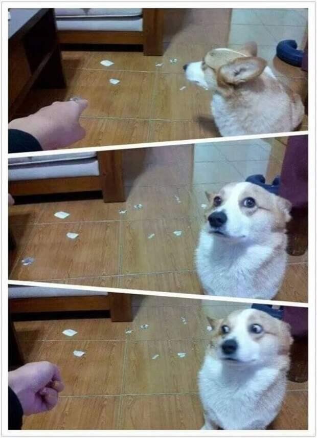 Виноватая собака