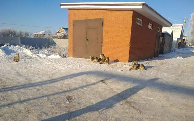 После жалоб жителей в прокуратуру в Каракулино заключили контракт на отлов бездомных животных
