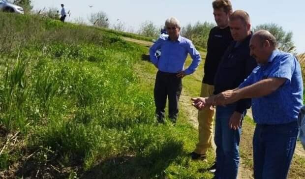 Натреть выросла урожайность риса вРостовской области